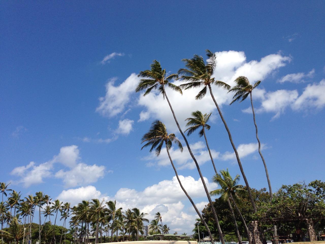 オリジナル写真 ハワイ パームツリー