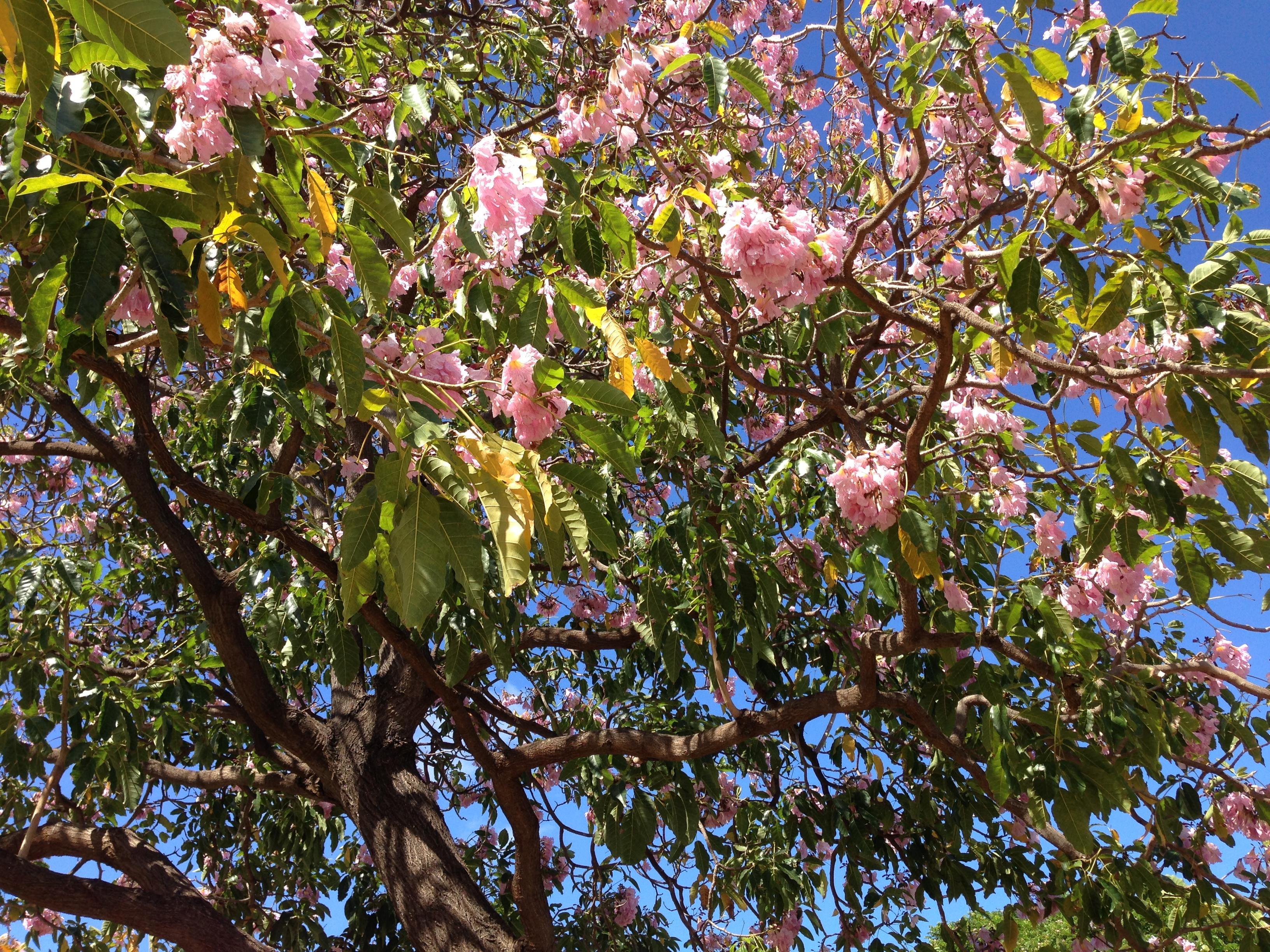 オリジナル写真 ハワイ木花