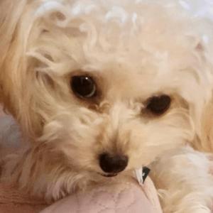 道枝駿佑と愛犬のララ
