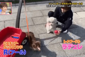 道枝駿佑と愛犬のラデュレとアール