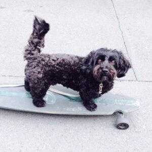 松田詩野の家族の愛犬
